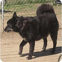 Adopt A Pet :: Stella - Afton, TN