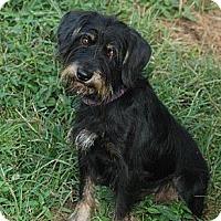 Adopt A Pet :: Reese - Albany, NY