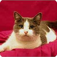 Adopt A Pet :: Mimi - Sacramento, CA