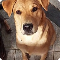 Adopt A Pet :: Chelsea - LaGrange, OH