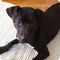 Adopt A Pet :: Nora - Framingham, MA