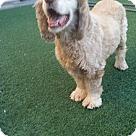 Adopt A Pet :: Bosley