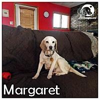 Adopt A Pet :: Margaret - Novi, MI