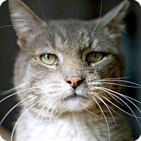 Adopt A Pet :: Handsome Jack Sparrow - Brooklyn, NY