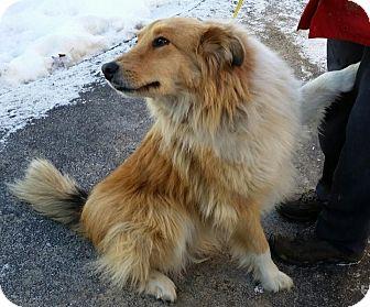 Lexington Kentucky Dog Rescue