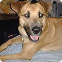 Adopt A Pet :: Annie / Courtesy Posting - Tucson, AZ