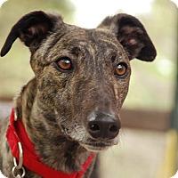 Adopt A Pet :: Hootie - Ware, MA