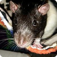 Adopt A Pet :: Deuce - Winchester, VA