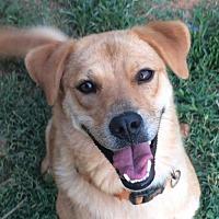 Adopt A Pet :: Ruby - Albemarle, NC