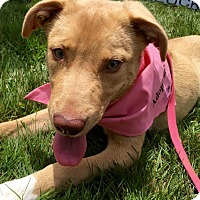 Adopt A Pet :: Kylie - in Maine - kennebunkport, ME