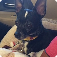 Adopt A Pet :: Cassidy - Las Vegas, NV
