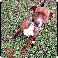 Adopt A Pet :: Annie - Charlemont, MA
