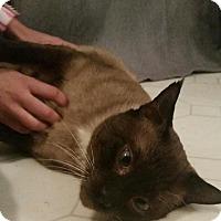 Adopt A Pet :: Sax - Gainesville, FL