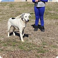 Adopt A Pet :: Dottie - Brattleboro, VT