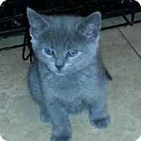 Adopt A Pet :: Sky - River Edge, NJ