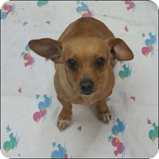 Chihuahua/Dachshund Mix Dog for adoption in Shreveport, Louisiana - Princess