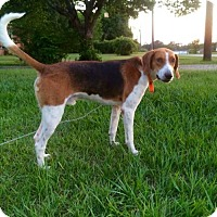 Adopt A Pet :: Mario - Warner Robins, GA