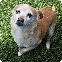 Adopt A Pet :: Roland - Chula Vista, CA