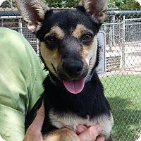 Adopt A Pet :: Trixie - Westport, CT
