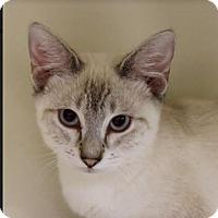 Adopt A Pet :: Wilke - Red Bluff, CA