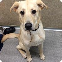 Adopt A Pet :: Bongo - Willmar, MN