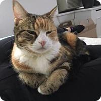 Adopt A Pet :: Junibee - New York, NY