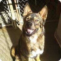 Adopt A Pet :: Hunter - Divide, CO