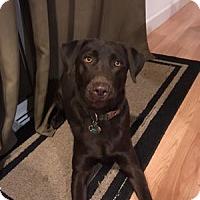 Adopt A Pet :: Truman - San Francisco, CA