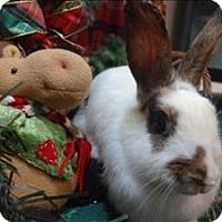 Adopt A Pet :: Jubilee - Portland, OR