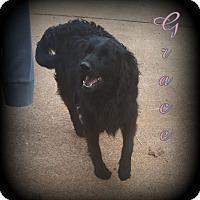 Adopt A Pet :: Grace - Denver, NC