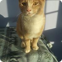 Adopt A Pet :: Boberito - Brookings, SD