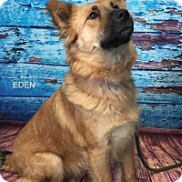 Adopt A Pet :: EDEN - Hibbing, MN