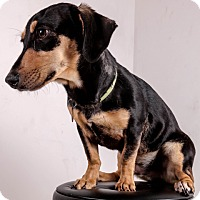 Adopt A Pet :: Peanut - Tulsa, OK