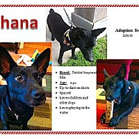 Adopt A Pet :: Shana - Crowley, LA