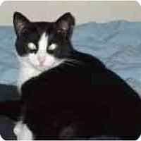 Adopt A Pet :: Mira - Pasadena, CA