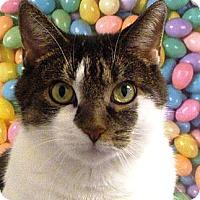 Adopt A Pet :: Tinkerbell - Albany, NY