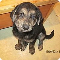 Adopt A Pet :: Hannah - Surrey, BC
