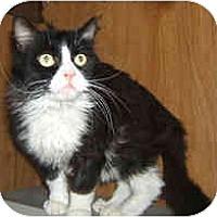 Adopt A Pet :: Paco - Dallas, TX