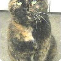 Adopt A Pet :: Pepper - Mesa, AZ