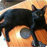 Adopt A Pet :: Dandy - Sterling Hgts, MI
