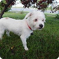 Adopt A Pet :: Susie - West Deptford, NJ