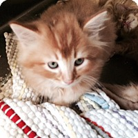 Adopt A Pet :: Whiskey - McDonough, GA