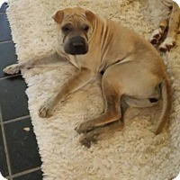 Adopt A Pet :: Penelope - pending - Mira Loma, CA
