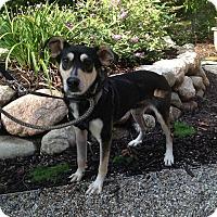 Adopt A Pet :: Lucky - Fennville, MI