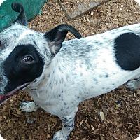 Adopt A Pet :: Sparks - Lebanon, CT