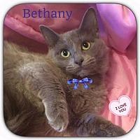 Adopt A Pet :: Bethany - Harrisburg, NC