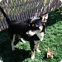 Adopt A Pet :: Tristan - Chula Vista, CA