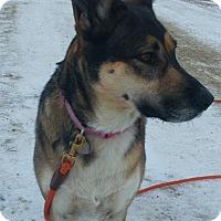 Adopt A Pet :: GEMMA - Winnipeg, MB