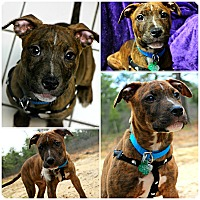 Adopt A Pet :: Peanut - Forked River, NJ