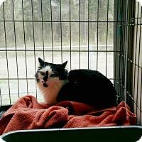 Adopt A Pet :: Dutchess - Smithers, BC
